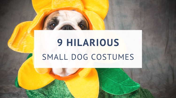 Funny dog costumes for small dogs