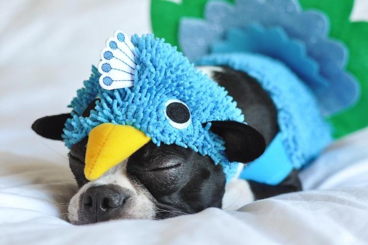 Small dog in costume