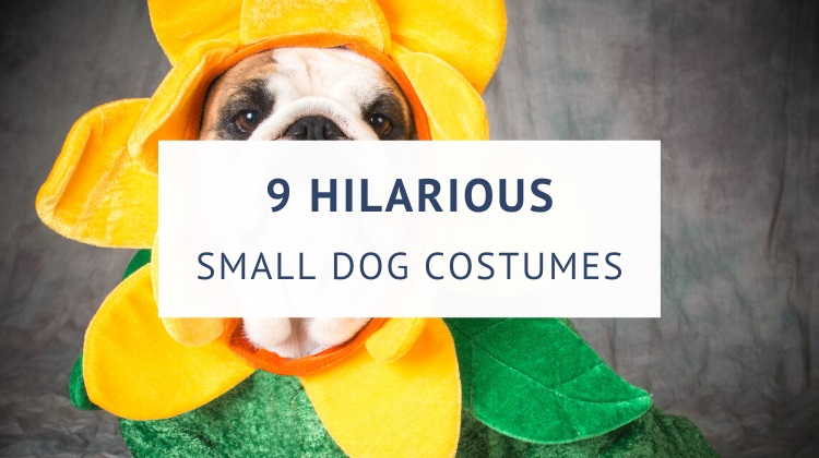 Hilarious small dog costumes